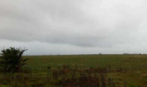 Se busca campo ganadero para arrendar hasta 500 hectareas.